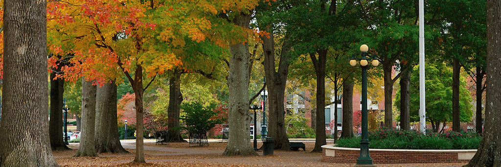 a scene of the grove with the leaves turning colors